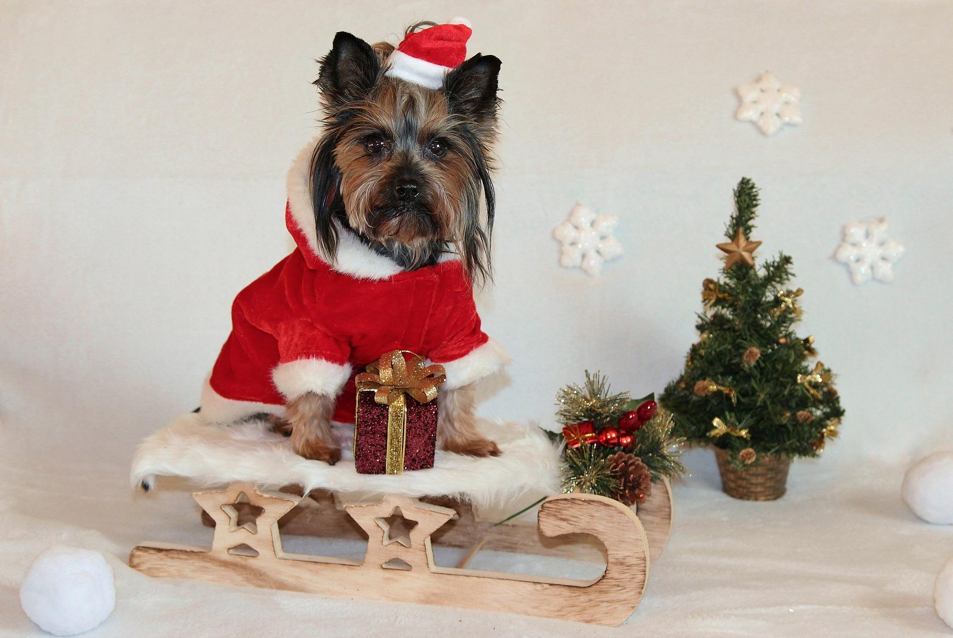 Car test drive: We drove Santa's sleigh